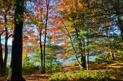 Wschodu słońca Killarney park fotografia royalty free