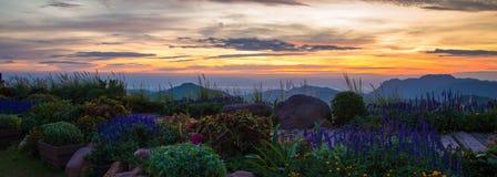 Wschodu słońca kwiatu ogród Fotografia Royalty Free