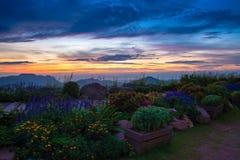Wschodu słońca kwiatu ogród Zdjęcia Stock