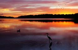 Wschodu słońca Narrabeen jeziora Zdjęcia Royalty Free