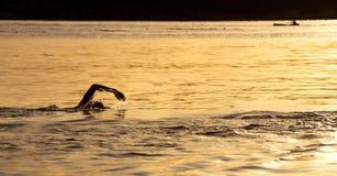 Wschodu słońca oceanu pływanie przy Balmoral, Sydney Zdjęcie Royalty Free