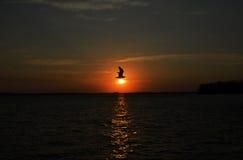 Wschodu słońca ptak Obrazy Royalty Free