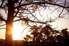 Wschodu słońca widok w wsi obrazy stock