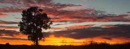 Wschodu słońca zmierzchu dubbo Obrazy Royalty Free