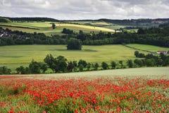 wsi anglików pola krajobrazu maczek Fotografia Royalty Free