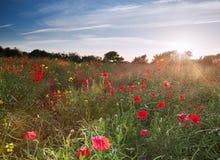 wsi anglików pola krajobrazu maczek Zdjęcie Royalty Free