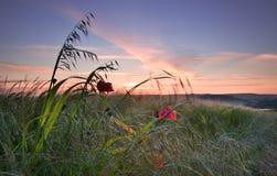 wsi anglików pola krajobrazu maczek Zdjęcia Stock