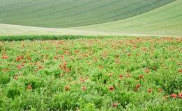 wsi anglików pola krajobrazu maczek Zdjęcie Stock