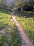 Wsi chodząca ścieżka Zdjęcie Royalty Free