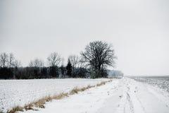 Wsi droga w polach Fotografia Stock