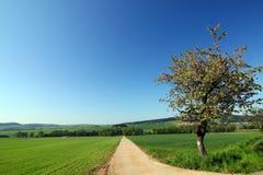 wsi drogi lato obrazy stock