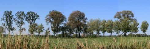 wsi drzewa Fotografia Royalty Free