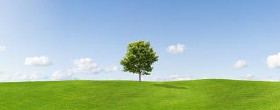 wsi drzewo samotny klonowy Obraz Stock