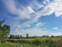 Wsi krajobrazowy i chmurny niebieskie niebo Zdjęcie Royalty Free