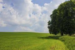 Wsi landskape drzewo i pole Fotografia Stock