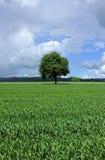 wsi pola sezonu lato drzewo Obrazy Stock