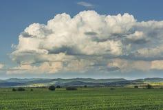 Wsi scena z wheatfield Zdjęcia Royalty Free