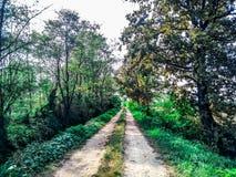 Wsi wiejska lasowa ścieżka zdjęcie stock