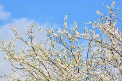 Wskaźnik wiosna na pięknym niebieskim niebie Zdjęcia Royalty Free