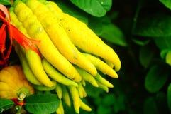 Wskazany palcem cedrat owoc spojrzenia jak palce Bardzo interesting〠' obraz royalty free
