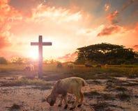 wskrzeszania pojęcie: baranek bóg przed krzyżem Chrystus Jezus fotografia royalty free