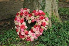Współczucie kwitnie blisko drzewa fotografia royalty free