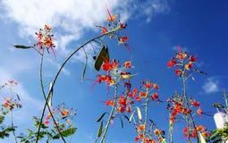 Współzawodniczyć otwartych kwiaty zdjęcia stock