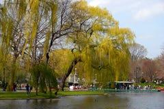 wspólne bostonu ogrodu społeczeństwo usa Obraz Royalty Free