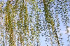 wspólne bostonu ogrodu społeczeństwo usa Zdjęcia Royalty Free