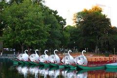 wspólne bostonu ogrodu społeczeństwo usa Obrazy Royalty Free