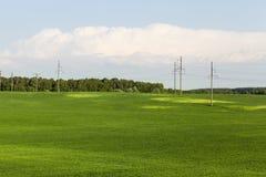 Wspólny rolny pole Zdjęcia Stock