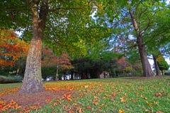 Wspaniała jesień lasu scena fotografia royalty free