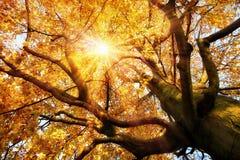 Wspaniała jesieni sceneria Zdjęcia Royalty Free