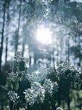 Wspaniała pogodna wiosny scena w lasach Kyiv, UKRAINA - zdjęcie stock
