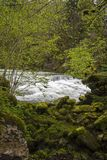Wspaniała rzeka w las fotografia stock