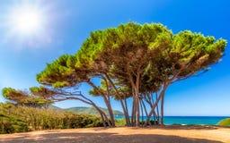 Wspaniałe sosny przy wybrzeżem Tuscany Obrazy Royalty Free