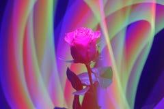 Wspaniałej róży jaskrawi czerwoni karmazyny barwią na abstrakcjonistycznym tle obrazy stock