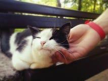 Wspaniały i chytry kot obrazy stock