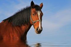 wspaniały koń Zdjęcie Stock