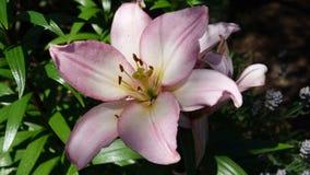 Wspaniały kwiat z lekkim cieniem obraz stock