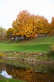 Wspaniały odbicie drzewo w rzece zdjęcia royalty free