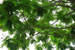 Wspaniały widok na niebie przez zielonych drzewnych liści Piękna zielona background/tekstura fotografia stock