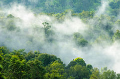 Wspaniały zielony las w mgle po deszczu Obrazy Stock
