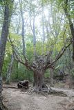 Wspaniały zielony las w Wrześniu Zdjęcia Stock
