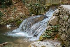 Wspaniały zielony las w Wrześniu Zdjęcie Royalty Free
