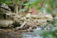 Wspaniały zielony las w Wrześniu Zdjęcia Royalty Free