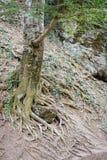 Wspaniały zielony las w Wrześniu Zdjęcie Stock
