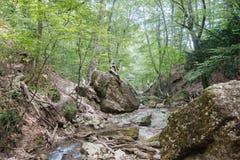 Wspaniały zielony las w Wrześniu Fotografia Stock