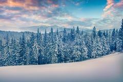 Wspaniały zima wschód słońca w Karpackich górach z śnieżnym cov Obrazy Stock