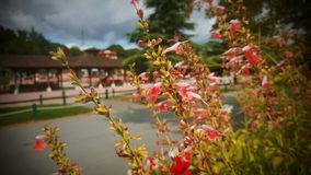 wspaniałe kwiaty zdjęcia royalty free